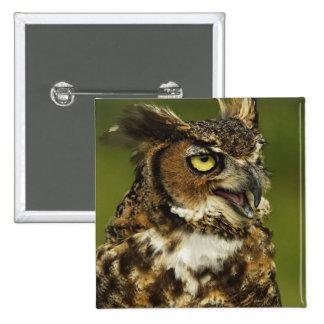 Great Horned Owl, Bubo virginianus, Captive 2 Pinback Button
