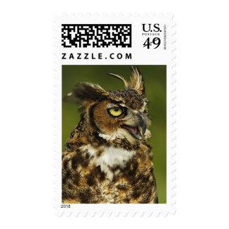 Great Horned Owl, Bubo virginianus, Captive 2 Postage Stamp