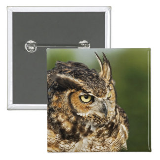 Great Horned Owl, Bubo virginianus, Captive Button
