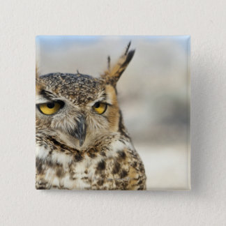 Great Horned Owl (Bubo virginianus), captive Button
