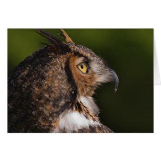 Great Horned Owl, Bubo virginianus, captive Card