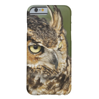 Great Horned Owl, Bubo virginianus, Captive Barely There iPhone 6 Case