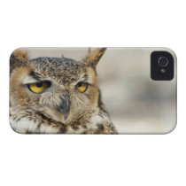 Great Horned Owl (Bubo virginianus), captive Case-Mate iPhone 4 Case