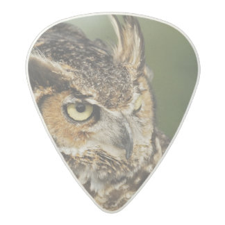 Great Horned Owl, Bubo virginianus, Captive Acetal Guitar Pick