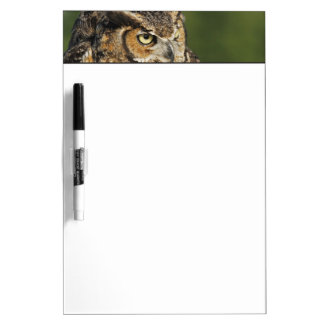 Great Horned Owl, Bubo virginianus, Captive Dry Erase Board