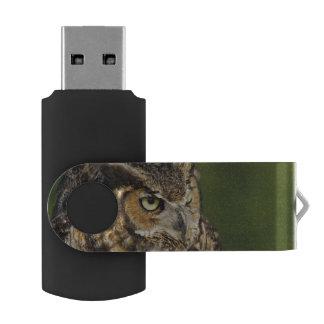 Great Horned Owl, Bubo virginianus, Captive Flash Drive