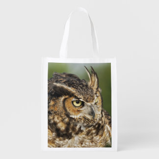 Great Horned Owl, Bubo virginianus, Captive Grocery Bag