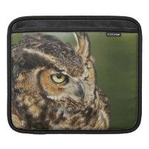 Great Horned Owl, Bubo virginianus, Captive iPad Sleeve