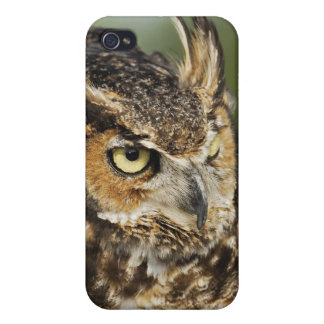 Great Horned Owl, Bubo virginianus, Captive Cases For iPhone 4