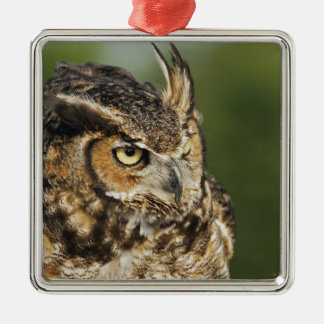Great Horned Owl, Bubo virginianus, Captive Metal Ornament