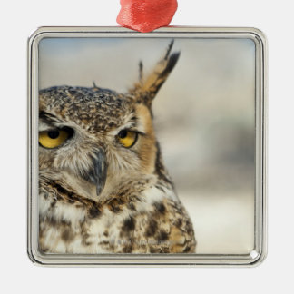 Great Horned Owl (Bubo virginianus), captive Metal Ornament