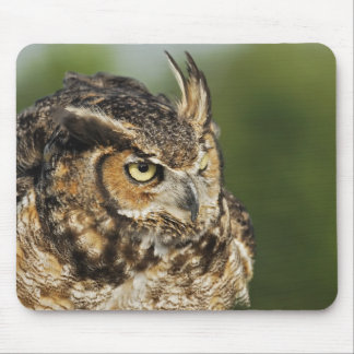 Great Horned Owl, Bubo virginianus, Captive Mouse Pad