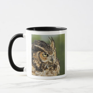 Great Horned Owl, Bubo virginianus, Captive Mug