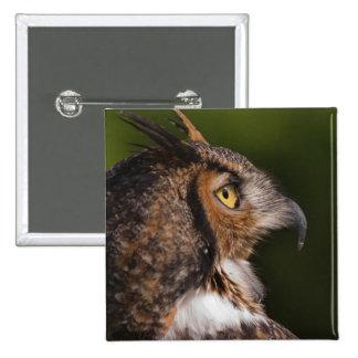 Great Horned Owl, Bubo virginianus, captive Pinback Button