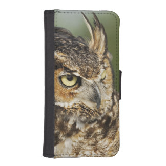 Great Horned Owl, Bubo virginianus, Captive iPhone 5 Wallet Cases