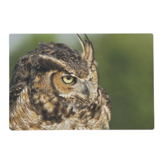Great Horned Owl, Bubo virginianus, Captive Placemat