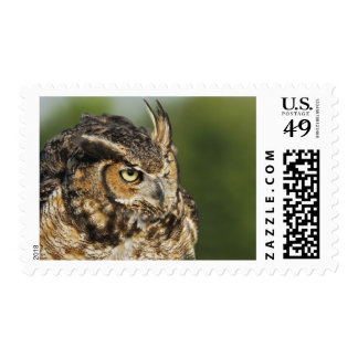 Great Horned Owl, Bubo virginianus, Captive Stamps
