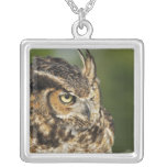 Great Horned Owl, Bubo virginianus, Captive Silver Plated Necklace