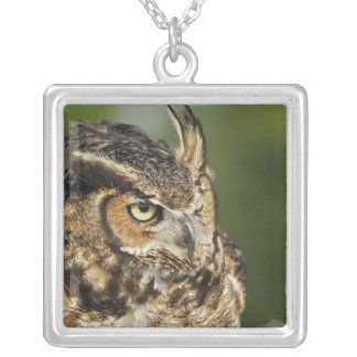 Great Horned Owl, Bubo virginianus, Captive Square Pendant Necklace