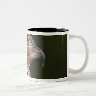 Great Horned Owl, Bubo virginianus, captive Two-Tone Coffee Mug