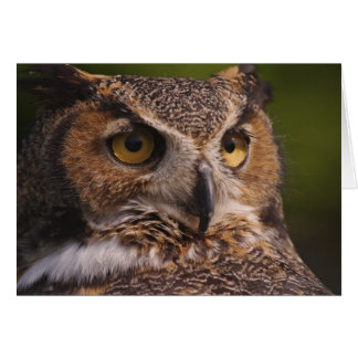 Great Horned Owl, Bubo virginianus Cards