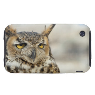 Great Horned Owl (Bubo virginianus) iPhone 3 Tough Cover