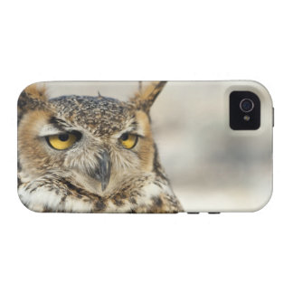 Great Horned Owl (Bubo virginianus) iPhone 4/4S Case