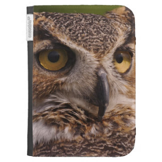 Great Horned Owl, Bubo virginianus Kindle 3 Cover