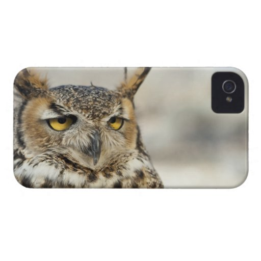 Great Horned Owl (Bubo virginianus) iPhone 4 Case-Mate Case