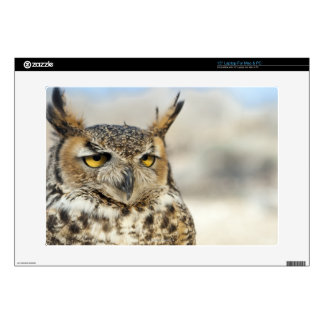 Great Horned Owl (Bubo virginianus) Decals For Laptops