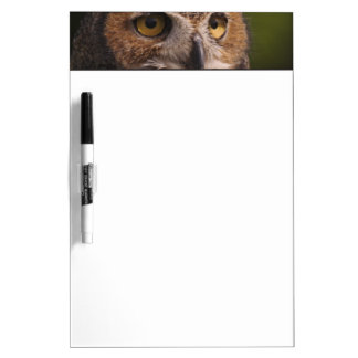 Great Horned Owl, Bubo virginianus Dry-Erase Board