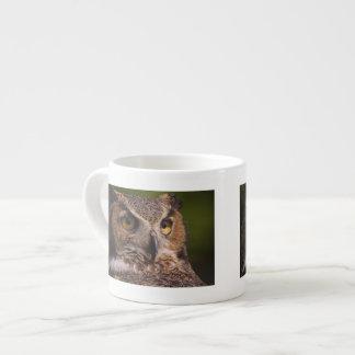 Great Horned Owl, Bubo virginianus Espresso Cup