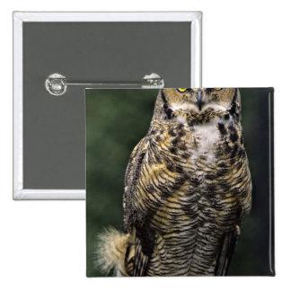 Great Horned Owl (Bubo virginianus), full body Button