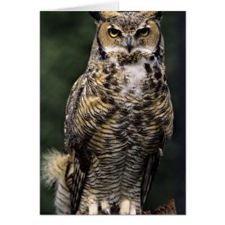 Great Horned Owl (Bubo virginianus), full body Card