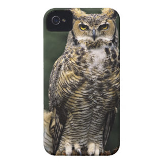 Great Horned Owl (Bubo virginianus), full body iPhone 4 Cases