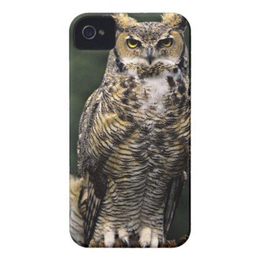 Great Horned Owl (Bubo virginianus), full body Blackberry Case
