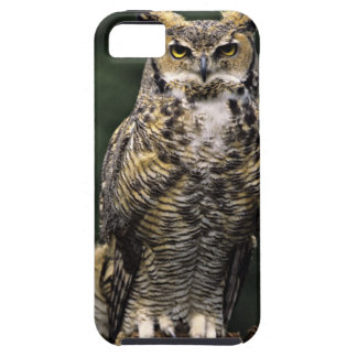 Great Horned Owl (Bubo virginianus), full body iPhone 5 Cover