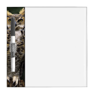 Great Horned Owl (Bubo virginianus), full body Dry Erase Board