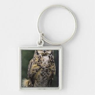 Great Horned Owl (Bubo virginianus), full body Keychains