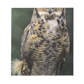 Great Horned Owl (Bubo virginianus), full body Memo Note Pads