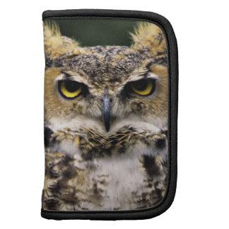 Great Horned Owl (Bubo virginianus), full body Folio Planners