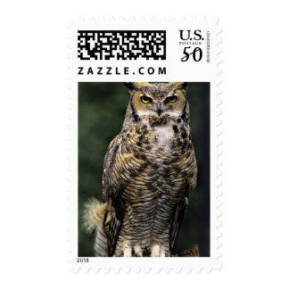 Great Horned Owl (Bubo virginianus), full body Postage