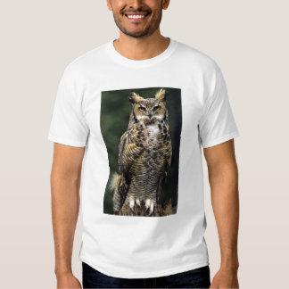 Great Horned Owl (Bubo virginianus), full body Shirt