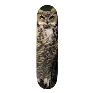 Great Horned Owl (Bubo virginianus), full body Skateboard