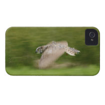 Great Horned Owl (Bubo virginianus) iPhone 4 Case