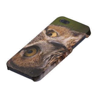 Great Horned Owl, Bubo virginianus Case For iPhone 5/5S
