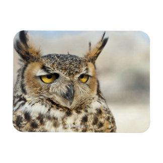 Great Horned Owl (Bubo virginianus) Magnet