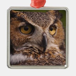 Great Horned Owl, Bubo virginianus Metal Ornament