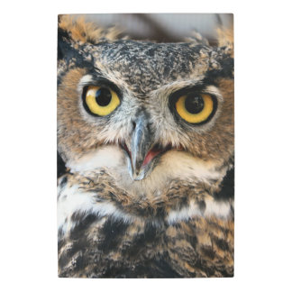 Great Horned Owl (Bubo virginianus) Metal Print