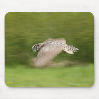 Great Horned Owl (Bubo virginianus) Mouse Pad